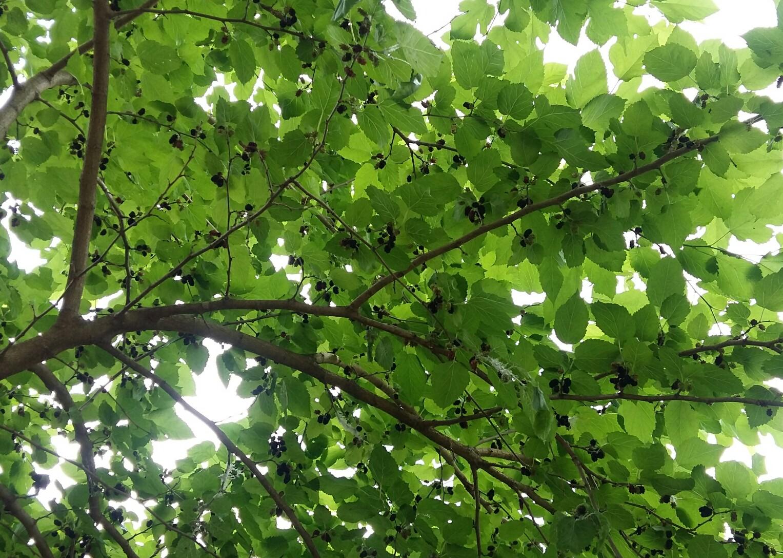 PicsArt_06-20-08.46.03.jpg